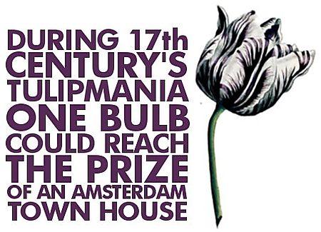 tulip-mania.png